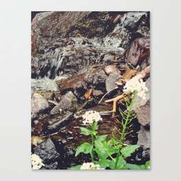 Colorado, rocks, flowers Canvas Print
