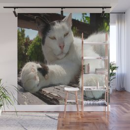 Black and White Bicolor Cat Lounging on A Park Bench Wall Mural
