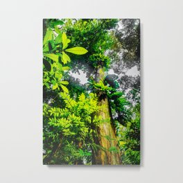 Tree Top - Details of the Amazon Rainforest Metal Print