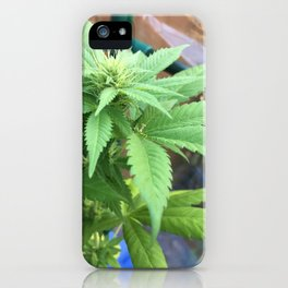 Cannabis and Mantis iPhone Case