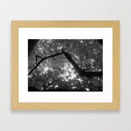 In the trees we are! Framed Art Print
