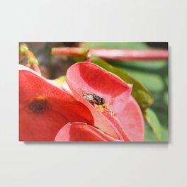 Fly on flower Metal Print