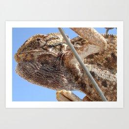 Close Up Of A Climbing Chameleon Art Print