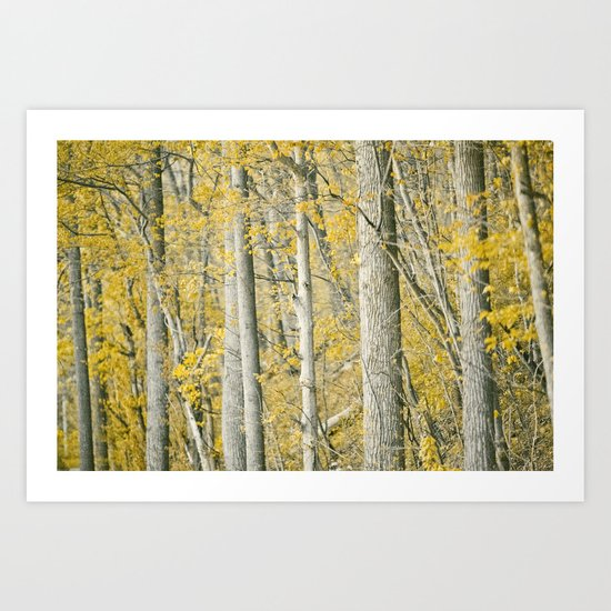 Amber Forest Art Print