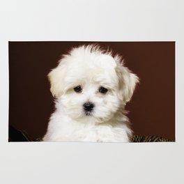 Adorable White Maltese Puppy Standing up in a Gold Christmas Basket Rug