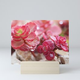 Succulent Garden Cactus Red Flowers Tropical Cacti with drops Mini Art Print