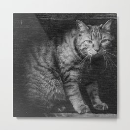 Fergus The Indoor Cat  Metal Print