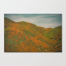 California Poppies 035 Canvas Print