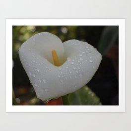 Dewdrop Lily Art Print
