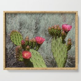 Cacti in Bloom - 3 Serving Tray