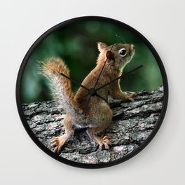 Young Red: Juvenile Red Squirrel Wall Clock