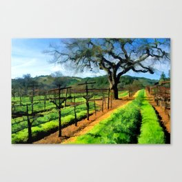 Spring in the Vineyard Fields Canvas Print
