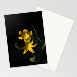 Dew drops on Yellow Glacier Lilies in Glacier National Park Montana Early Morning Stationery Cards
