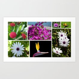 Collage of Maderian Flowers, Art Print