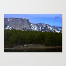 Elk of Yellowstone National Park Canvas Print