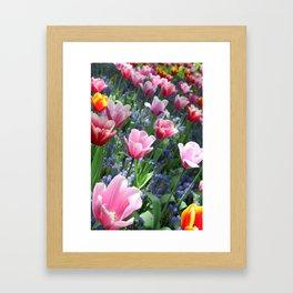 Tulips at the Keukenhof Framed Art Print