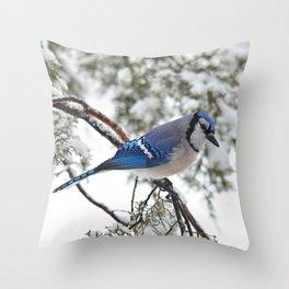 Beautiful Blue Jay Throw Pillow