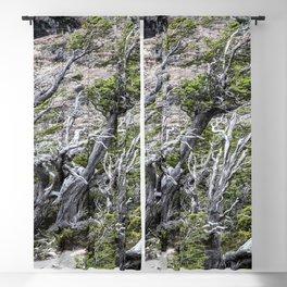 Windswept Woodland Blackout Curtain