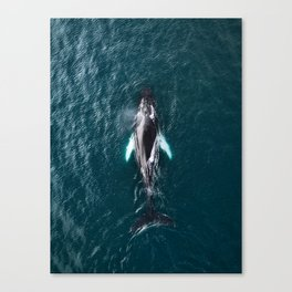 Humpback Whale in Iceland - Wildlife Photography Canvas Print