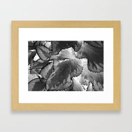 Shady Framed Art Print