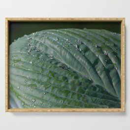 Green Leaf with Dew Serving Tray