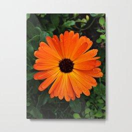 SMILE - DAISY FLOWER #3 #Orange #Raindrops Metal Print