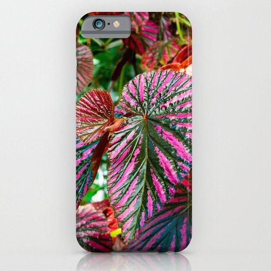 Begonia exotica iPhone & iPod Case