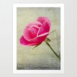 Virgin Rose Art Print