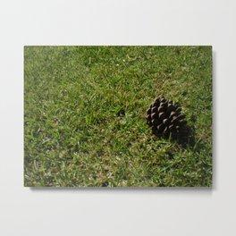 Pine - tree. Metal Print