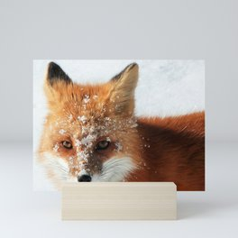 Snowy Faced Cheeky Fox with Tongue Out Mini Art Print