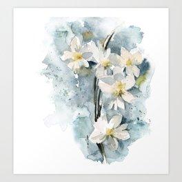 White daffodils Art Print