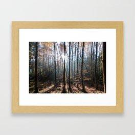 Light Shining in the Forest Framed Art Print