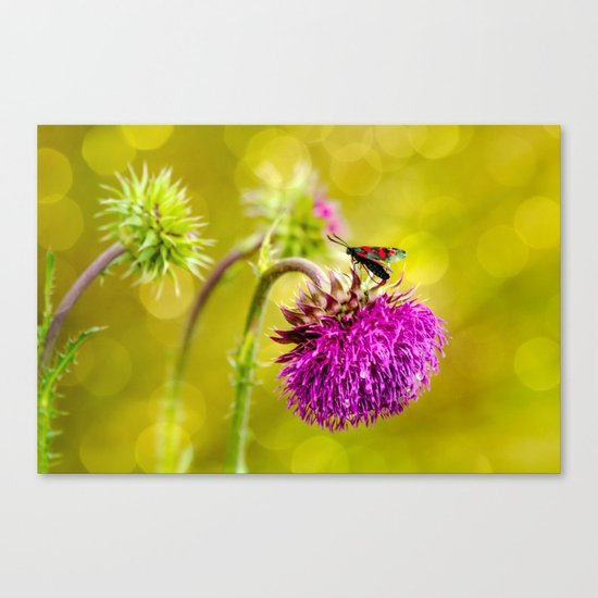 Butterfly and а thistle Canvas Print