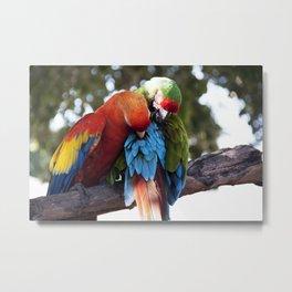 Macaws Embrace www.scsprints.com Metal Print