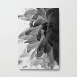 Flower Close Up - Black/White - One Metal Print