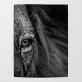 Lion eye close up Poster