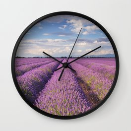 Blooming fields of lavender in the Provence, southern France Wall Clock