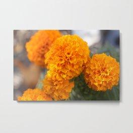 Marigolds Metal Print