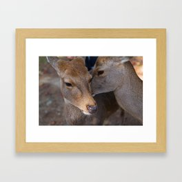Deer Secrets Framed Art Print