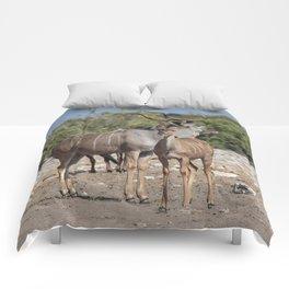 Kudu Comforters