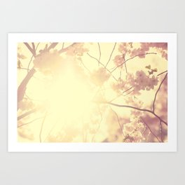 CHERRY SUNLIGHT Art Print