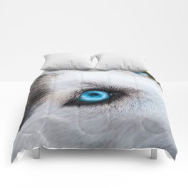 Siberian Husky Eyes (Color) Comforters