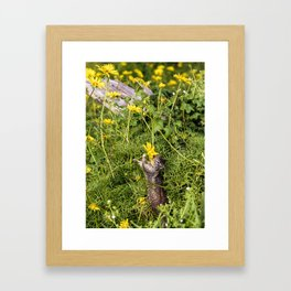 Spring Snack Framed Art Print