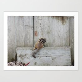 Where are my nuts? Art Print