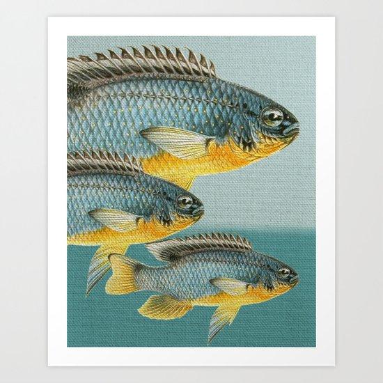 Fish Classic Designs 12 Art Print