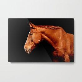 Horse Brown Portrait Metal Print