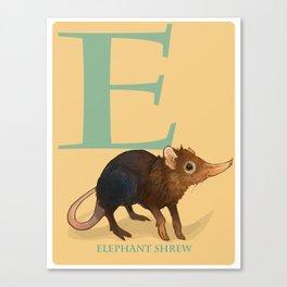 E is for Elephant Shrew: Under Appreciated Animals™, unusual creatures ABC nursery decor for kids Canvas Print