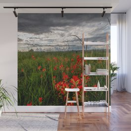 Brighten the Day - Indian Paintbrush Wildflowers in Eastern Oklahoma Wall Mural