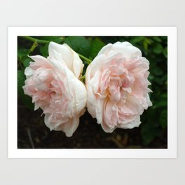 Couple of Roses Art Print