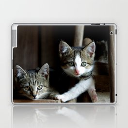 A small cats dream team in the siesta Laptop & iPad Skin